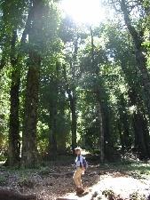 トレッキングでは木々の香りを満喫できる