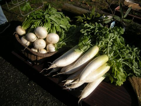地元の立派な野菜たち