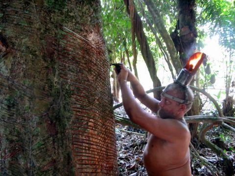 ゴム樹液を採取