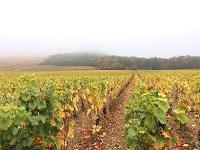 K様 ひとり旅/ブルゴーニュブドウ畑をボーッと眺めてのんびり~
