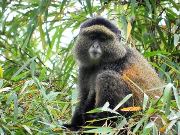 ムカヒンガ国立公園2
